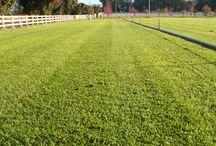 Kikuyu / Sydney Lawn and Turf Supplies Kikuyu - sydneylawnandturfsupplies.com.au