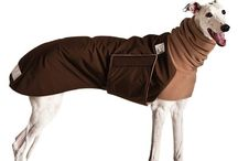 Greyhound Dog Apparel / Greyhounds stride easily in dog coats and gear by Voyagers K9 Apparel, tailored specifically to fit this fine dog breed. Quality Greyhound dog clothes for winter, spring, summer, and fall. USA Made.