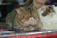 Koty / Koty zdjęcia kotów