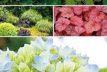 Shade loving plants, condo living