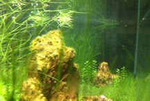 My Iwagumi aquarium