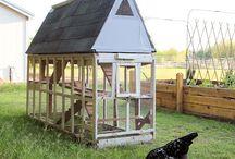 2017 Homestead: backyard chickens / by Rebecca Benson