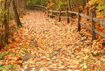 Fall / Fall is my FAVORITE season, it needs it's own spot :D / by Elizabeth Deasy