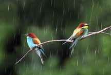 Singing in the rain.......Just singing in the rain