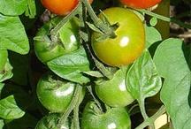 Fertilizing/Plant nutrition