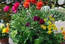 flower gardening / by Brenda Wright