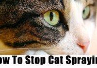 Cat Spraying / Cat Spraying No More