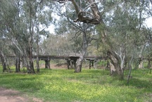 Scenery in Warren NSW