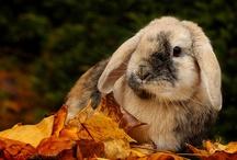 Bunnies ♥ / L O V E