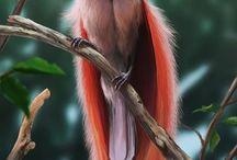 Dieren. Paradijsvogels