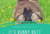 Bunny butt friday