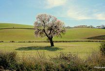 Andalusian Landscapes - Paisajes de Andalucía