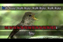 Luonto,linnut