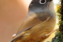 Stunning Birds