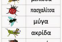 Έντομα - Πεταλούδες