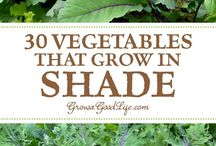 Growing vegetables in shade