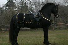 Horse mini Ideas