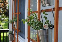 Outdoor Plants / by Traci Petrashek