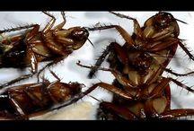κατσαριδες κουνουπια
