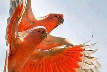 Papagáj, parrots, budgie
