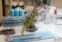 Wabi-Kusa & Co. / Wasserpflanzen emers als Lifestyle-Deko oder als schnelle Einrichtung fürs Aquarium. Schön gestaltete Vasen, Schalen, Terrarien + Zubehör.