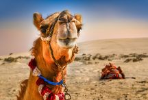 Voyage Jordanie & Émirats arabes unis avec Dubaï / Nature & Histoire millénaire et monde de démesure au coeur de déserts légendaires
