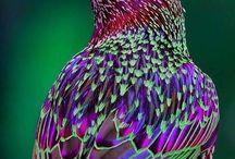 Nature's singers / by Terrye Gordon