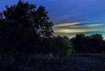 Photographing Fireflies