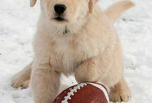 Super Bowl Pets