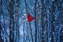birds, butterflies & winged things