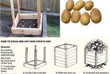 grow spuds with pallets