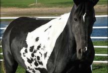 Cute horse / A cute horse