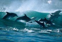 αγαπητά δελφίνια