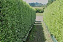 Hedge ideas