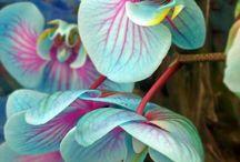 plantas,orquideas, etc...