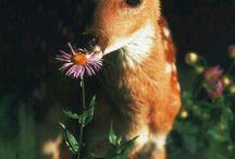 Bambi & co.
