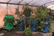 Recipientes plantas urbanos
