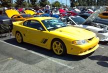 SN 95 Mustangs