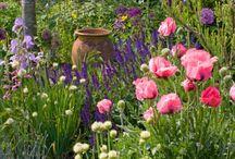 Aileen and Iain / Garden ideas