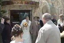 """Svatba v ZOO / Chcete pojmout důležitý životní krok netradičně? Pak si své """"ano"""" řekněte v naší zoo. Jen málo novomanželů se může pochlubit, že jim byl na svatbě za svědka slon či zebra. A pokud přesvědčíte naši gorilu, aby si oblékla kravatu a šla svědčit, třeba nebudeme proti:-)  Objednávejte zde: http://www.impresio.eu/zazitek/svatba-v-zoo"""