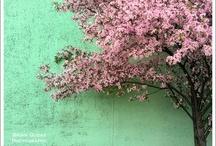 Photo : Bicolore ***