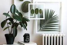 préselt növények