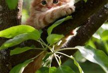 Skønne katte