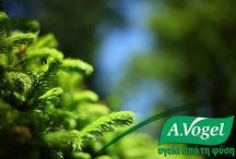 A.Vogel Santasapina / Το άγριο έλατο χρησιμοποιείται σε περιπτώσεις βρογχίτιδας, ιγμορίτιδας, καταρροής, βραχνάδας, ερεθισμένου λαιμού και βήχα.  Περιέχει ρητίνη και αιθέριο έλαιο άγριας ελάτης, τερπένια και ταννίνη, τα οποία δρούν ευεργετικά, καταπραϋνοντας με φυσικό τρόπο το ερεθισμένο ανώτερο αναπνευστικό σύστημα.