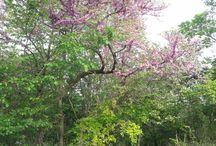 Primavera - Springtime