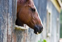Equus Ecurie / by Laura Woodyard