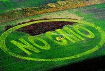 Monsanto news / by Dee Woosley