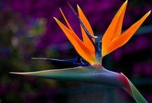 Botanical - Flowers / Amazing botanical photos