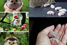 Cute Animal Love !!