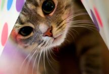 Cats / All About Kitty